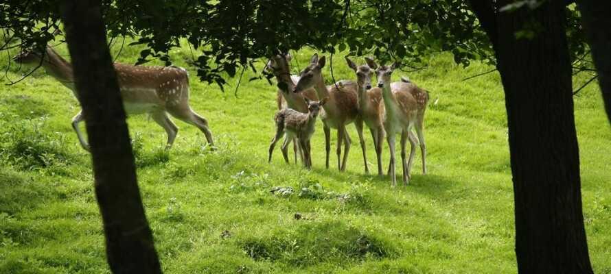 Machen Sie einen Spaziergang im Park des Gasthofes und sehen Sie sich die Hirsche an.