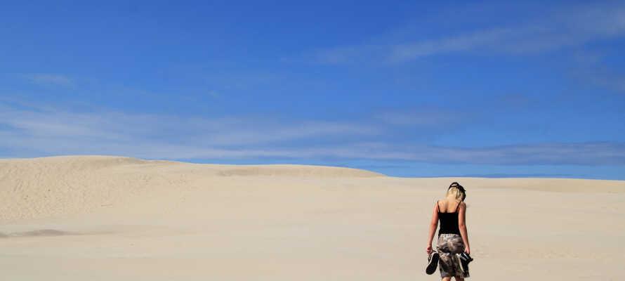 Vandra igenom Danmarks största sanddynor, Råbjerg Mile, som varje år rör sig 15 meter österut.