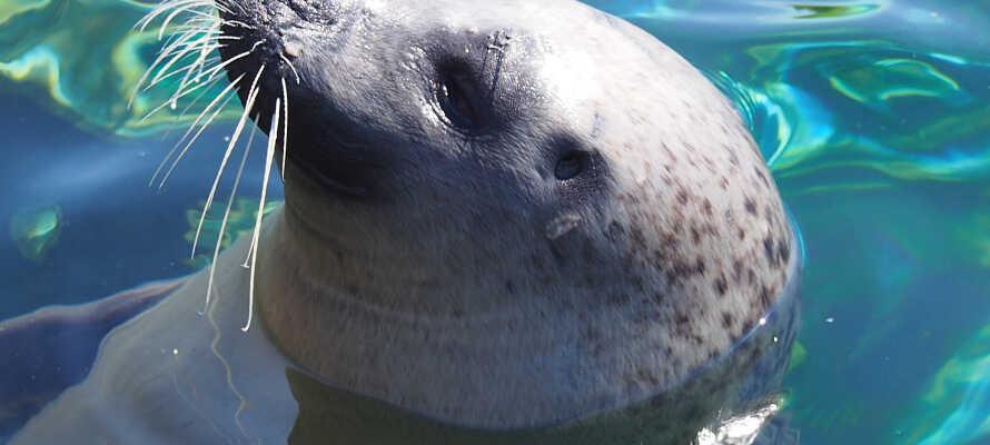 Besuchen Sie das  Nordsøen Oceanarium, Nordeuropas größtes Aquarium, das weniger als einen Kilometer vom Hotel entfernt liegt.