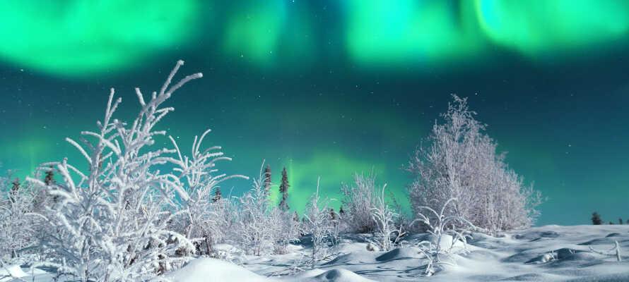 Wenn Sie viel Glück haben, können Sie das Nordlicht sehen.