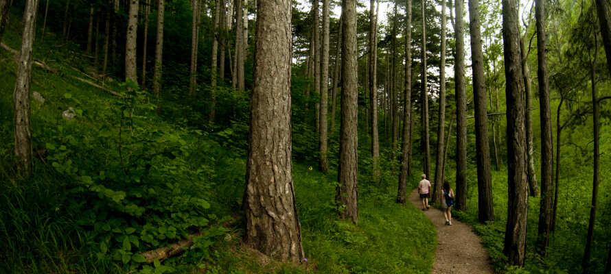 Erleben Sie Deep Forest Art Land - einen Ausstellungsraum unter freiem Himmel, nur 20 Minuten vom Hotel entfernt.