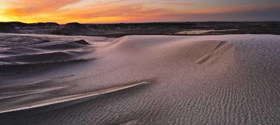 Gå en fantastisk promenad på Nordeuropas största sanddyner Råbjerg Mile. På toppen väntar en suverän utsikt.