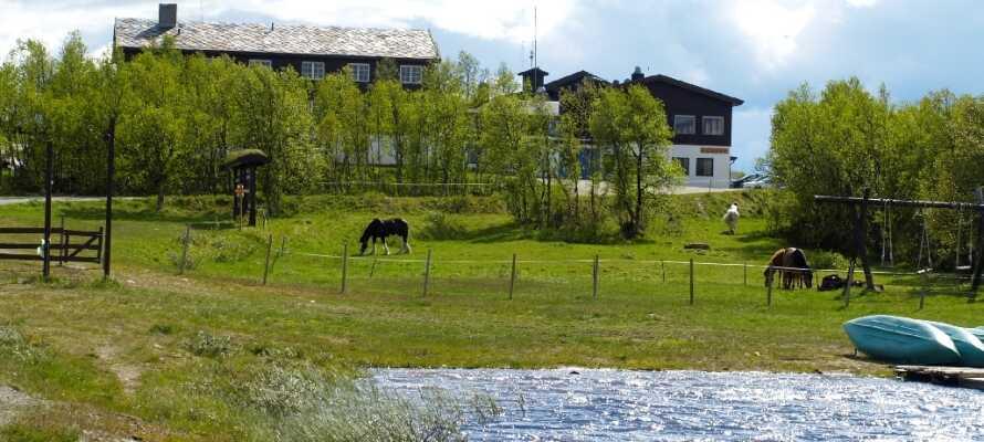 Vandringsturerna går genom området på sommaren och skidturerna på vintern.