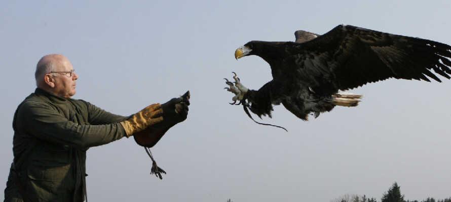 Entdecken Sie die vielen Attraktionen Nordjütlands, wie z. B. das Adlerreservat Eagle World in Bindslev.