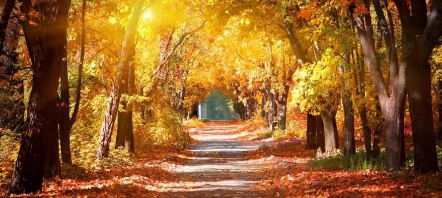Området bjuder på allt från botaniska trädgårdar till golfbanor och vackra skogar.