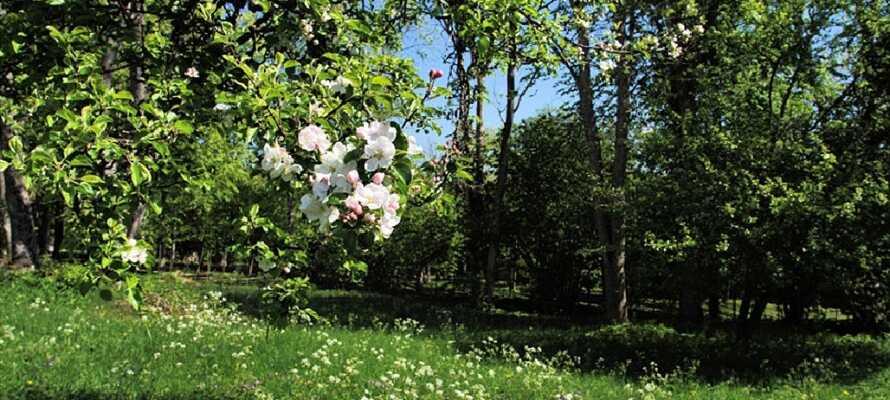 En av Europas eldste nasjonalparker har vakre blomsterenger omkranset av tett skog