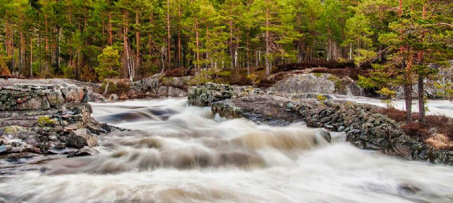 Koppsåna är ett av många vattendrag i Åmli
