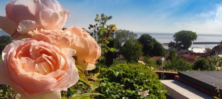 Hotellets rosehage i italiensk stil, har over 300 planter med 30 ulike arter.