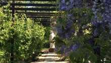 Genießen Sie das gute Wetter im hoteleigenen, duftenden Rosengarten