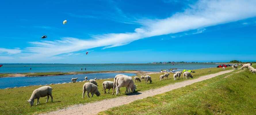Overalt på Femern finner dere vakre naturopplevelser. Bl.a. byr den lange kystlinjen på mange skjønne strender.