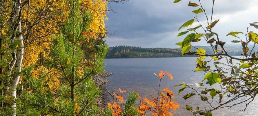 Med kort afstand til Väsman-søen har I gode muligheder for at nyde solen og bade om sommeren.