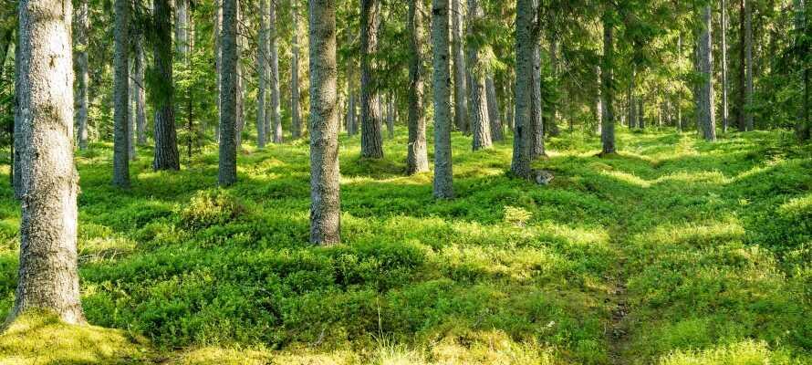 Nærområdet byder på smukke vandrestier gennem skove.