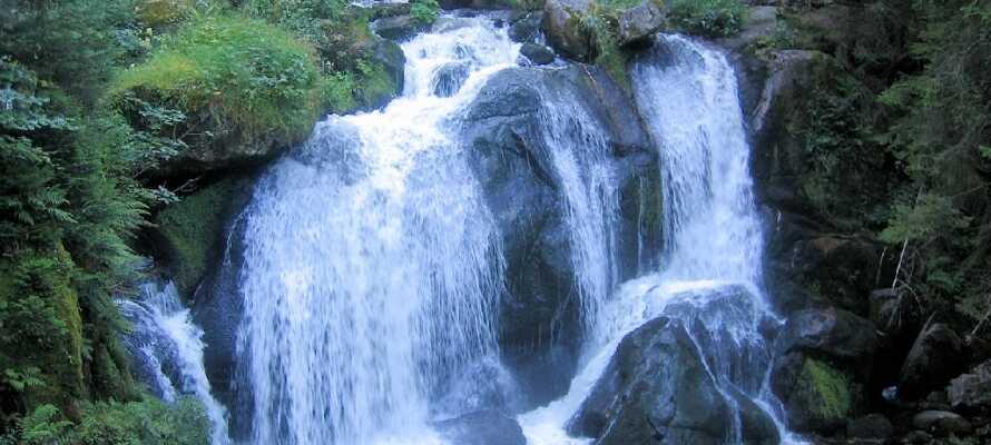 Schwarzwald byr på unike vandreturer og flotte fosser – heriblandt et av Tysklands største, Triberger Wasserfälle.