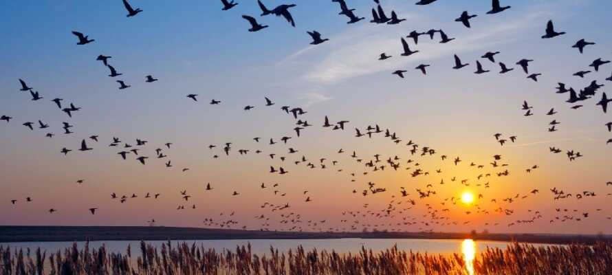 Kør en tur til Nordsøkysten og tilbring en dag på stranden eller oplev det spændende fugleliv ved Vadehavet.