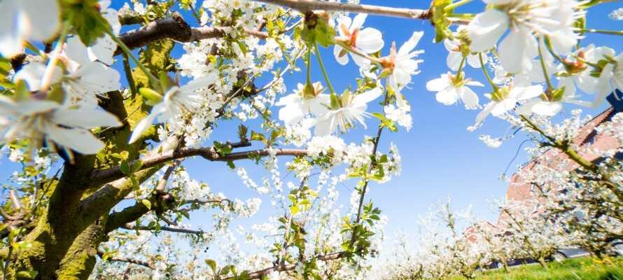 Nyd roen blandt tusinder af frugttræer eller tag på udflugt til de omkringliggende byer.