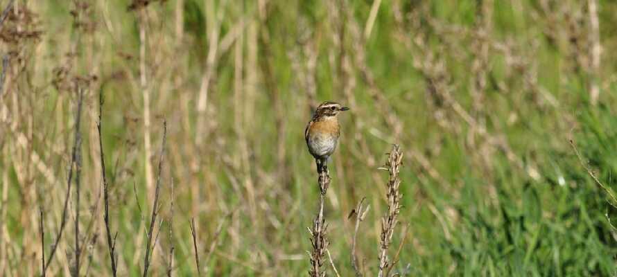 Här finner ni flera skyddade naturområden i närheten, såsom Drömling, ett av Europas viktigaste fågelreservat.