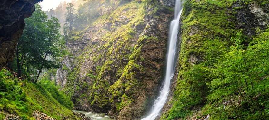 Die Umgebung eignet sich hervorragend für Wander- und Fahrradtouren sowie für Ausflüge. Erleben Sie z. B. die schöne Liechtensteinklamm.