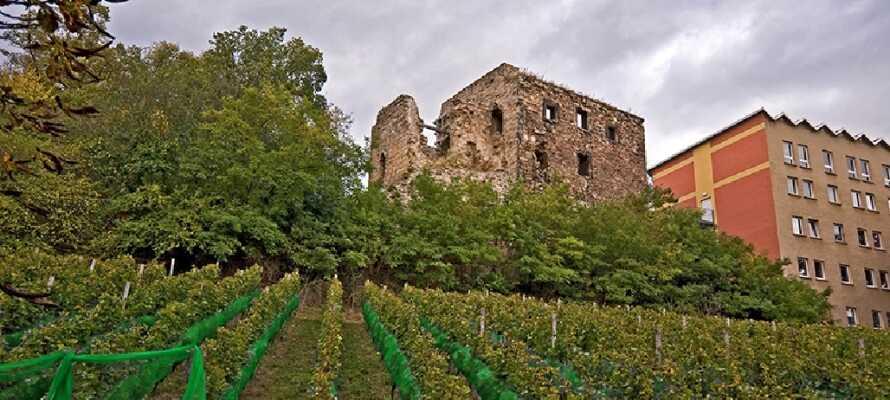 Das Hotel Himmelsscheibe liegt umgeben von Weinbergen und Ruinen, wodurch sich ein mediterraner Eindruck ergibt.