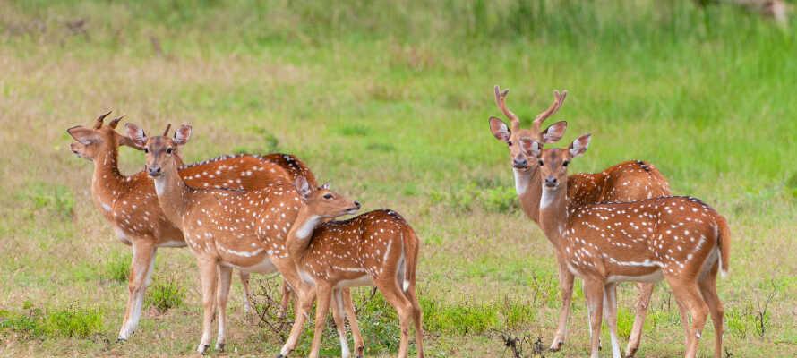 Tag en tur i naturen og besøg Hjorthagen Nature Reserve.