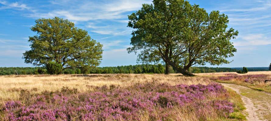 Passa på att ta er ut på upptäcktsfärd i naturen och vandra runt i naturreservatet Lüneburger Heide.