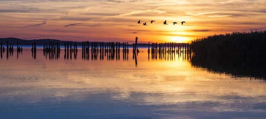 Rügen er et sandt naturparadis og har utrolig meget at byde på, lige fra golfoplevelser til UNESCO-listede naturparker.