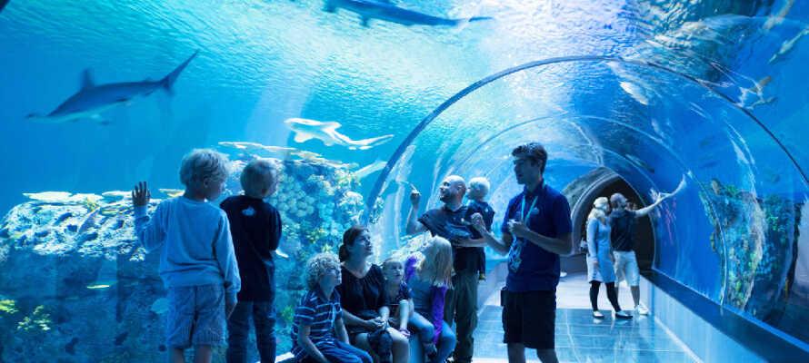 Tag på besøg i Nordeuropas største akvarium, Den Blå Planet, som blot ligger nogle få kilometer fra hotellet!