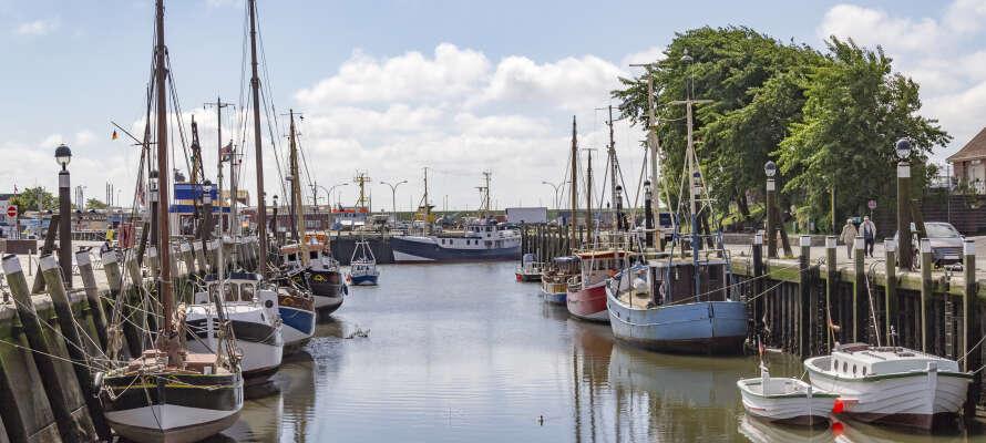 Smaka på traditionella nordsjökrabbor, färskt fångade, direkt från båtarna i hamnen.