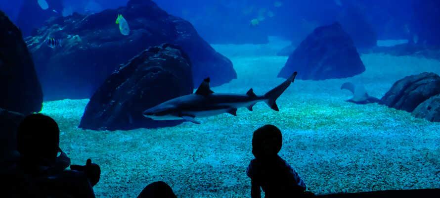 Upplev det 3,000 m² stora akvariet Meereszentrum Fehmarn.