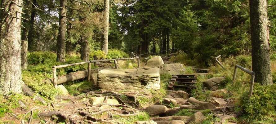 National Park Harz er det perfekte sted at vandre, hvor I samtidig kan nyde den smukke natur.