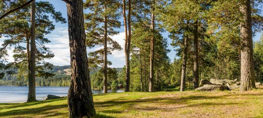 Gå en tur ad vandreruten, Bæreia Rundt, hvor I bl.a. passerer nogle af områdets mest populære badesteder.