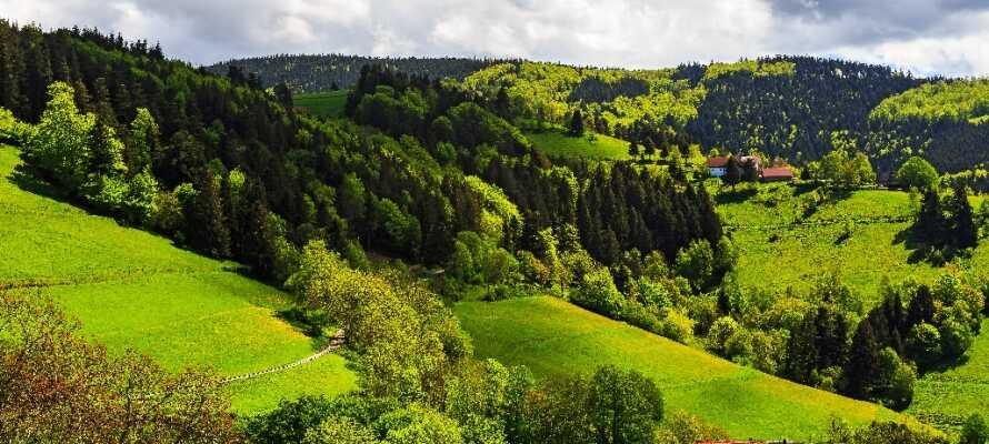 Hotel Bären ligger i det smukke og meget populære område Schwarzwald, der tilbyder et væld af grønne omgivelser.