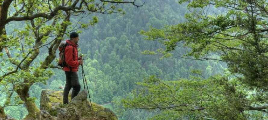Im Schwarzwald mit seinen grünen Wäldern finden Sie eine Vielzahl von fantastischen Wanderwegen mit schönen Aussichten.