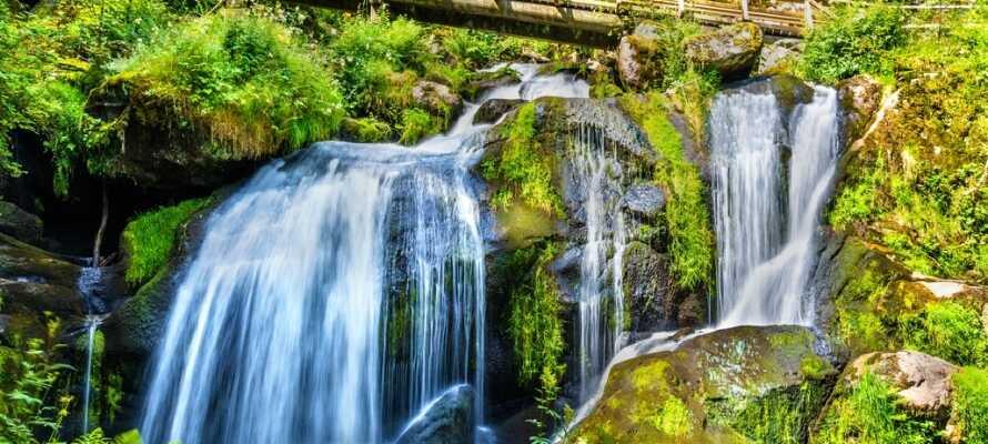 I Triberg finder I nogle af Tysklands højeste og mest spektakulære vandfald. Oplev vandet fosse fra 160 meters højde!