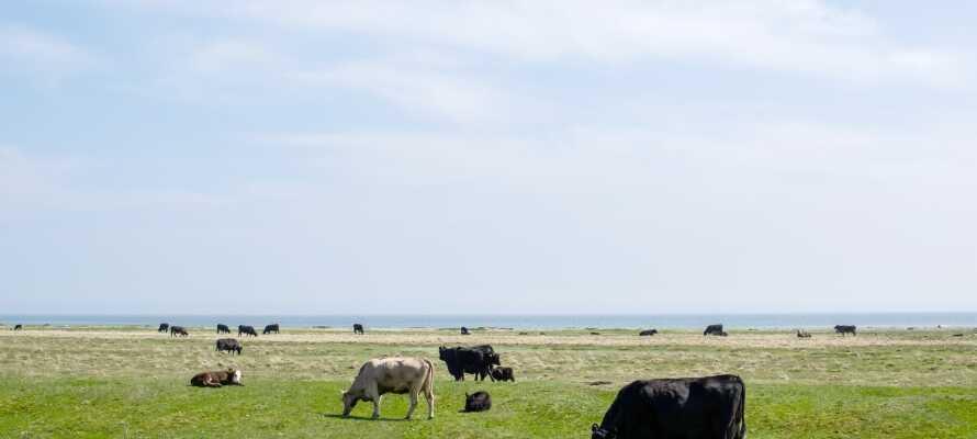 Die Natur auf Öland ist aufgrund der Beschaffenheit der Kalksteininsel einzigartig. Im Süden gibt es Alvar-Böden mit einer kargen, ausgedehnten Landschaft.