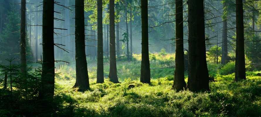Hotellet är omgivet av Naturpark Harz/Sachsen-Anhalt med idylliska skogslandskap, kristallklara floder, spegelblanka sjöar och spännande medeltidsstäder.