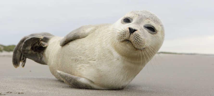 Machen Sie einen Familienausflug nach Fanø, wo Sie die Robben und die besondere Inselkultur erleben können.