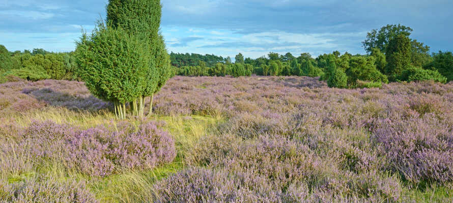 Emslands herlige natur, kjennetegnes ved vakre lyng-landskap og skogsområder, og er perfekt til gå- og sykkelturer.