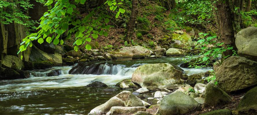 Bodefloden udmunder i Saale men har dannet en smuk dal der er kendt for sin uberørte natur.