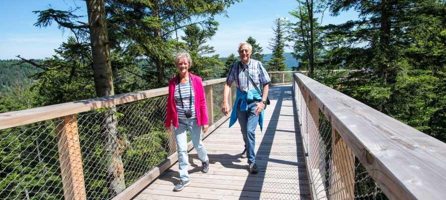Ta chansen att vandra bland trädtopparna i Baumwipfelpfad Bad Harzburg.