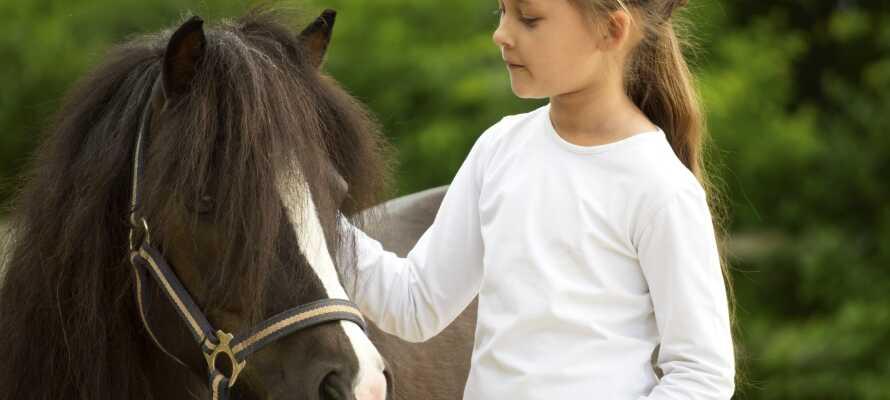 Hotellets egen hestegård har ponniridning med hestevogn. Det er en treffsikker slager blant barna.