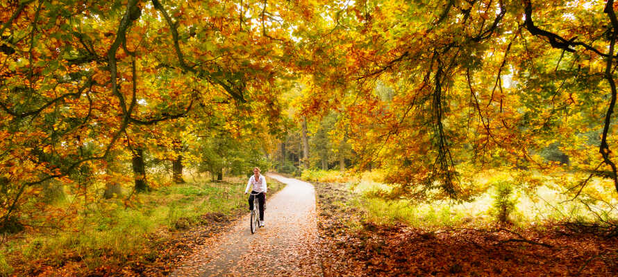 Hyr en cykel på hotellet och tag er ut på upptäcktsfärd i den natursköna omgivningen.
