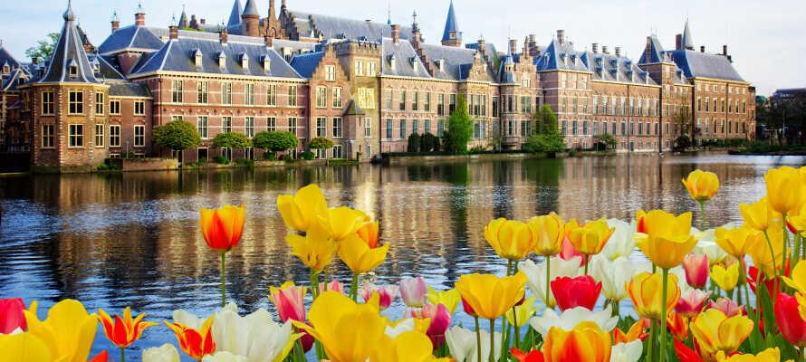 Holland är välkänt för sina vackra och färgrika tulpaner som blommar under vårkanten.
