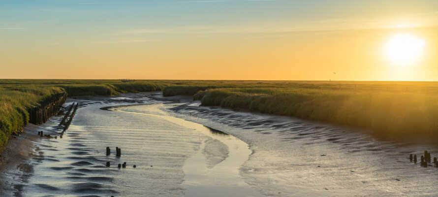 Von Husum aus können Sie geführte Wanderungen zu den Sandbänken und Halligen im Wattenmeer unternehmen.