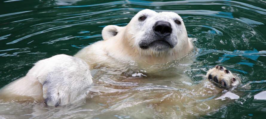 Ikke langt fra hotellet ligger Tierpark Berlin som er Europas største dyrepark