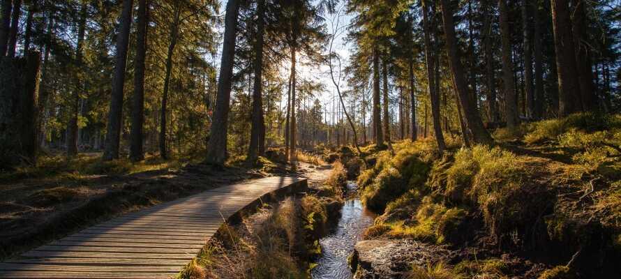 De smukke vandrestier som snor sig gennem de maleriske landskaber med skove og bjerge, giver jer uforglemmelige naturoplevelser i Harzen.
