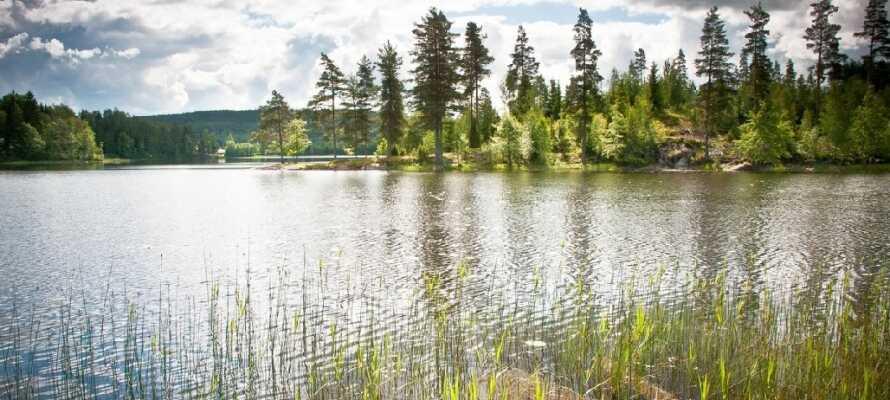 Erkunden Sie die schwedische Wildnis mit ihren tiefen Wäldern und riesigen Bergen.
