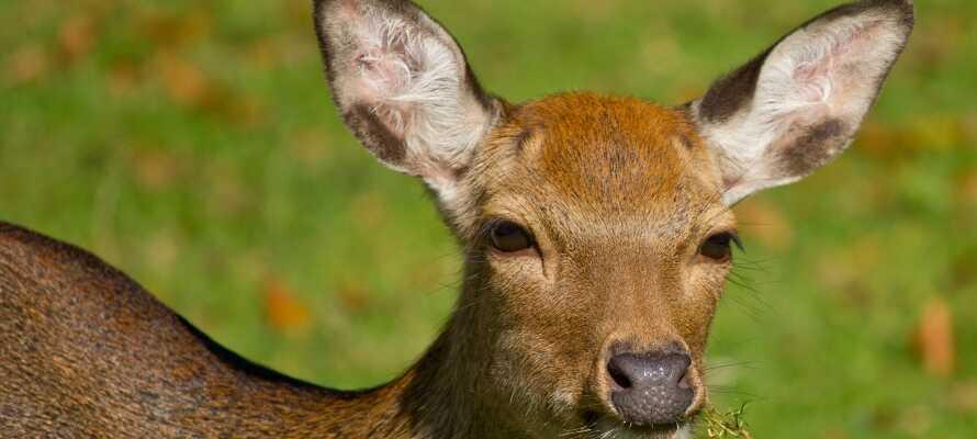 I har kort afstand til den hyggelige Dyrehave i Nørreskoven, hvor søde dådyr og Sikahjorte går frit rundt