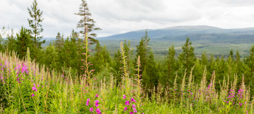 Hold ferie midt i den smukke natur i Dalarna. Her er der alt fra smukke søer til grønne skove.