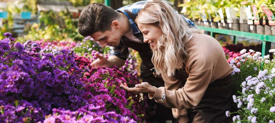 Göttingen bietet drei botanische Gärten, die alle mit der Universität der Stadt verbunden sind.