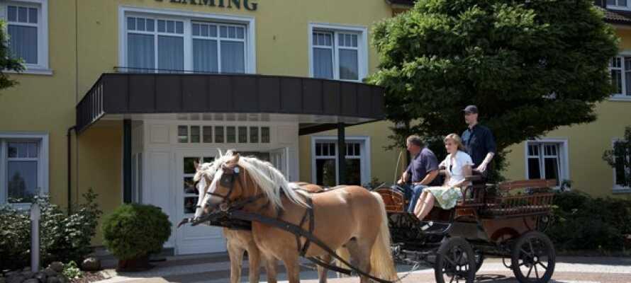 Opplev en bit av Tyskland i rolig trav med hest og kjerre. Det er ferie det!